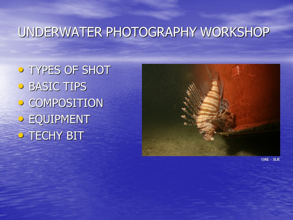 UNDERWATER PHOTOGRAPHY WORKSHOP TYPES OF SHOT TYPES OF SHOT BASIC TIPS BASIC TIPS COMPOSITION COMPOSITION EQUIPMENT EQUIPMENT TECHY BIT TECHY BIT UAE - SLR