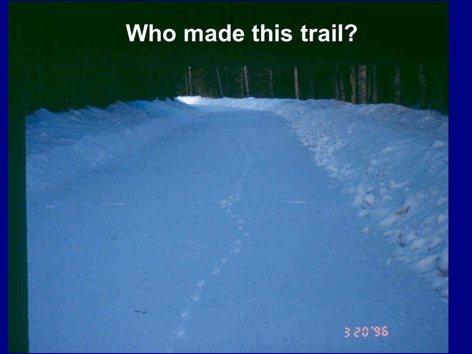 Who made this trail