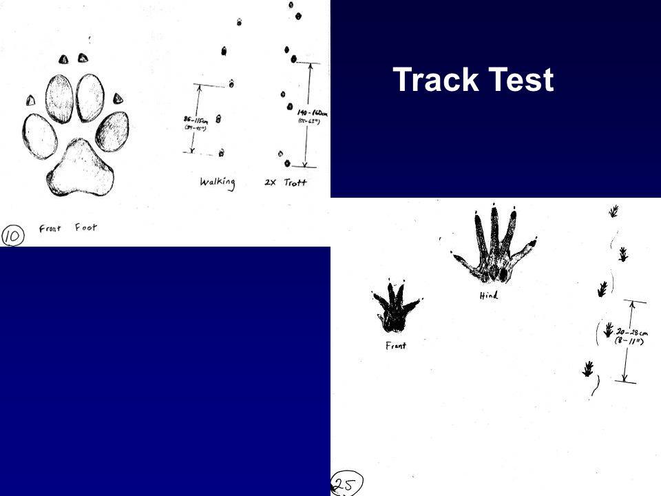 Track Test