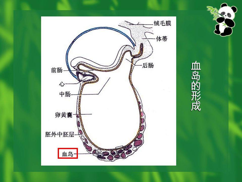 ( 三 ) 心脏的内部分隔 1. 房室管的分隔 2. 原始心房的分隔 3. 原始心室的分隔 4. 动脉干与心球的分隔