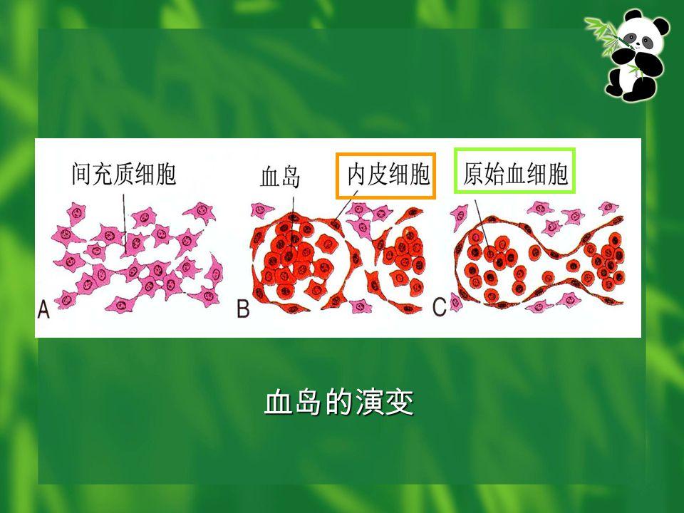 原始心血管系统包括 原始心血管系统包括 心管: 1 对 动脉: 1 对背主动脉 静脉:前、后主静脉各 1 对 汇合为左、右总主静脉 汇合为左、右总主静脉 卵黄动脉数对 卵黄静脉 1 对 卵黄动脉数对 卵黄静脉 1 对 脐动脉 1 对 脐静脉 1 对 脐动脉 1 对 脐静脉 1 对 6 对弓动脉 6 对弓动脉