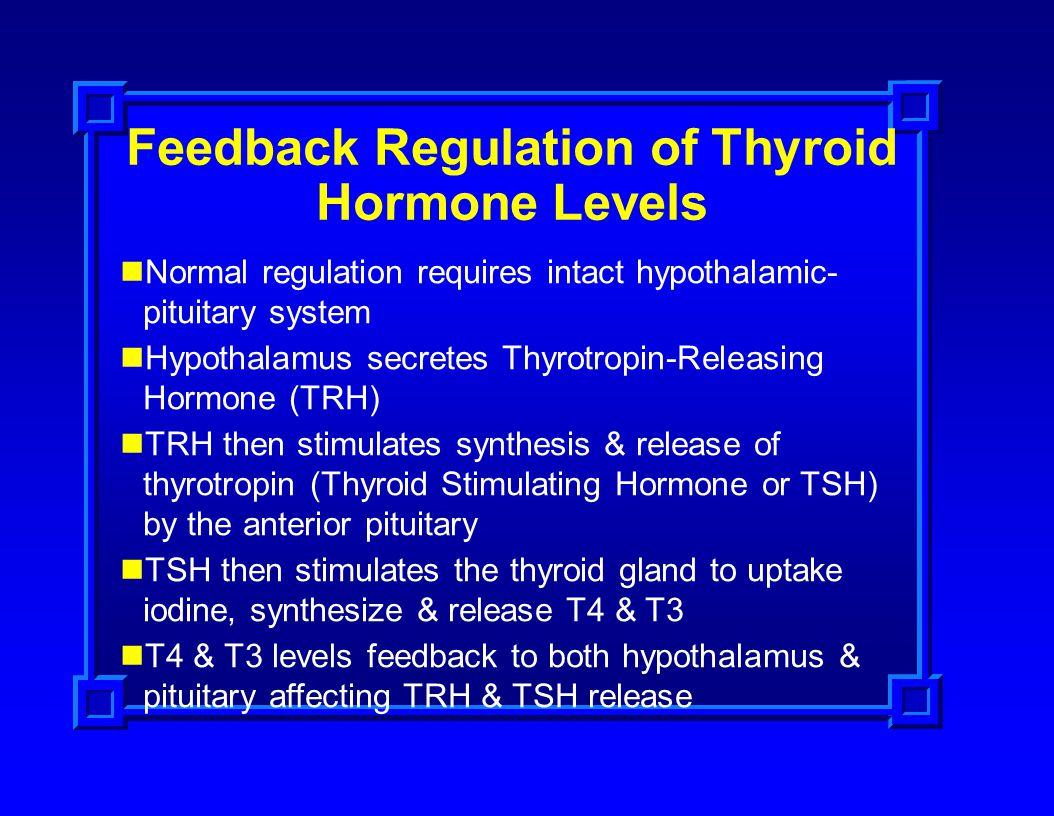 Feedback Regulation of Thyroid Hormone Levels Normal regulation requires intact hypothalamic- pituitary system Hypothalamus secretes Thyrotropin-Relea