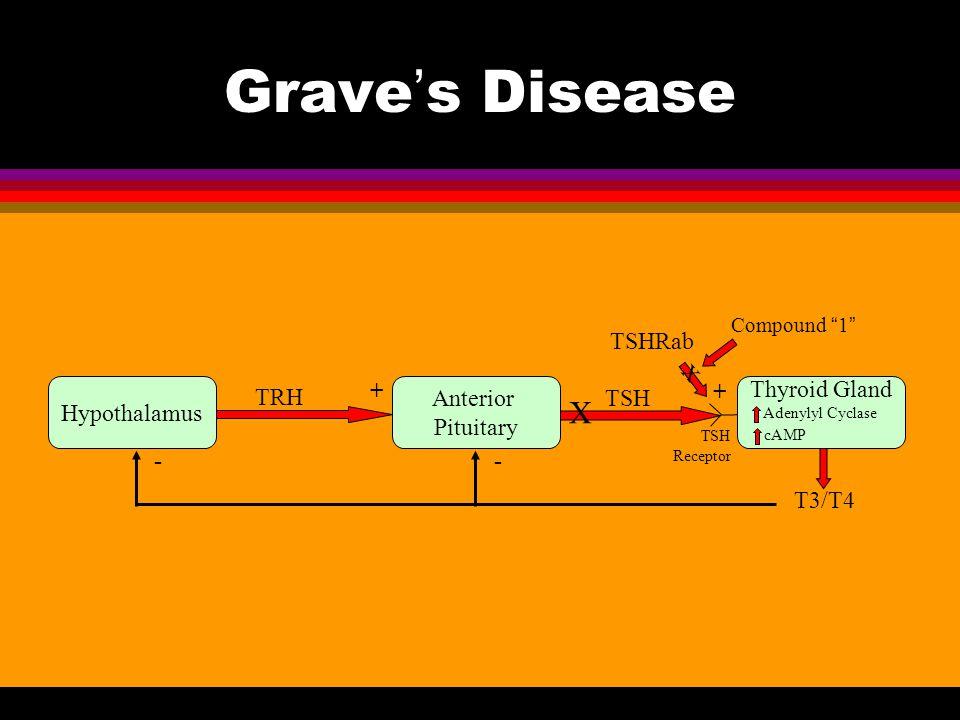 """Grave's Disease Hypothalamus Anterior Pituitary Thyroid Gland TRH T3/T4 TSH + + -- TSH Receptor Adenylyl Cyclase cAMP X TSHRab X Compound """"1"""""""