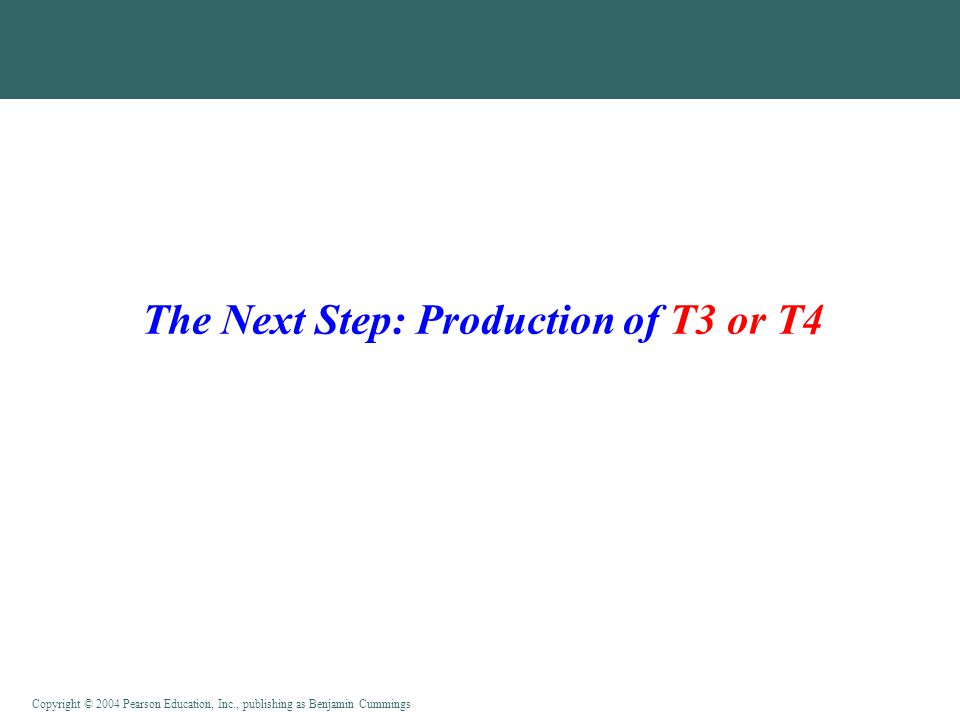Copyright © 2004 Pearson Education, Inc., publishing as Benjamin Cummings The Next Step: Production of T3 or T4