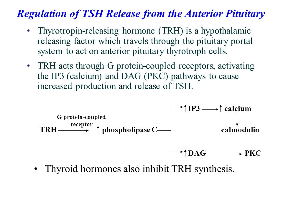 Thyrotropin-releasing hormone (TRH) is a hypothalamic releasing factor which travels through the pituitary portal system to act on anterior pituitary