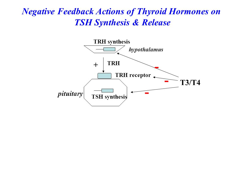 hypothalamus TRH TRH receptor TSH synthesis pituitary T3/T4 + - - - TRH synthesis Negative Feedback Actions of Thyroid Hormones on TSH Synthesis & Rel