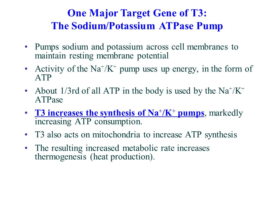 Pumps sodium and potassium across cell membranes to maintain resting membrane potential Activity of the Na + /K + pump uses up energy, in the form of