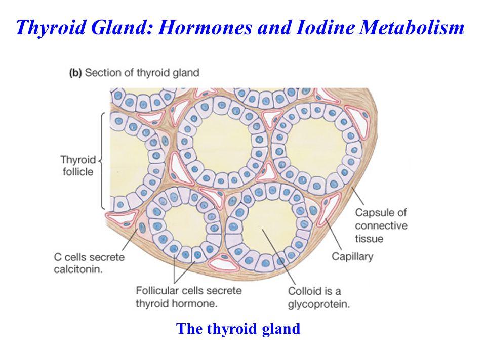 EXAMPLES OF THYROID DISEASES Hypothyroidism Hyperthyroidism