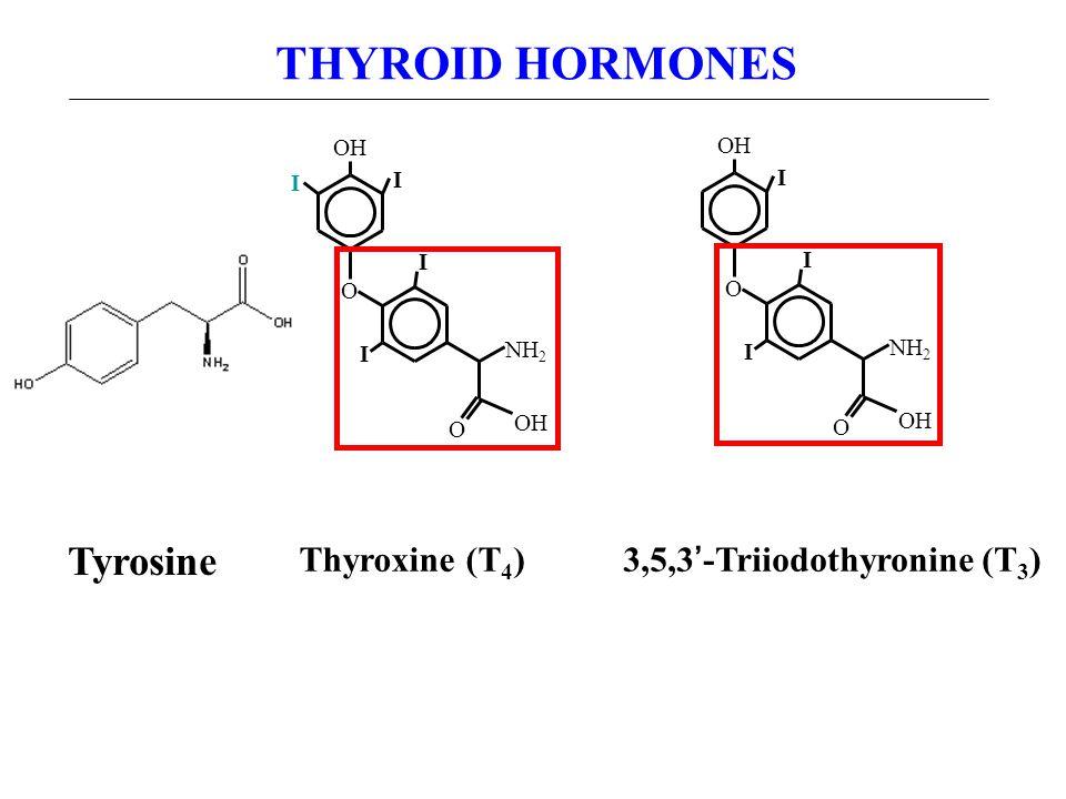 O OH I I I I O NH 2 Thyroxine (T 4 ) O OH I I I O NH 2 3,5,3'-Triiodothyronine (T 3 ) THYROID HORMONES Tyrosine