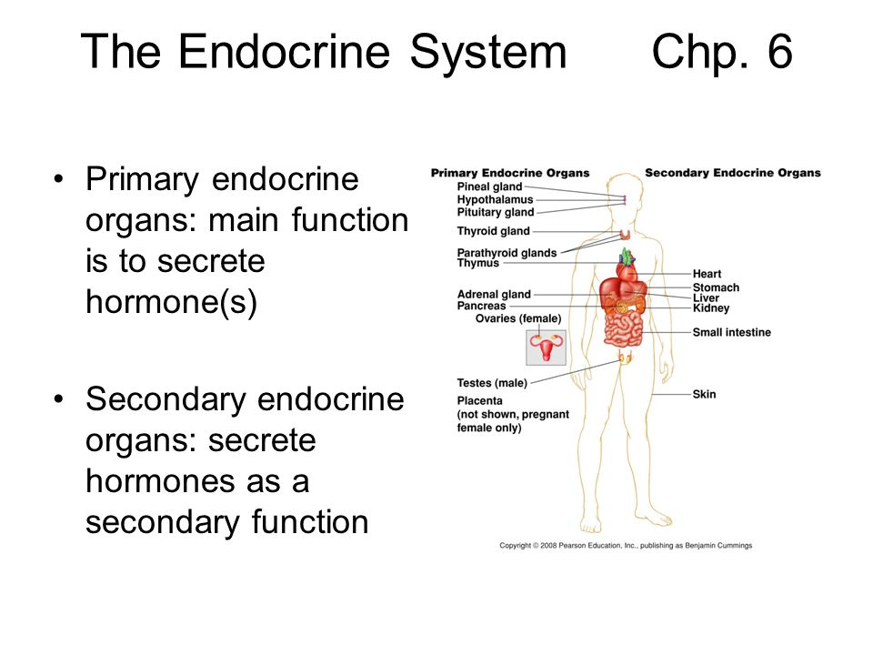 Primary endocrine organs Hypothalamus and pituitary gland secrete hormones and regulate other endocrine organs.