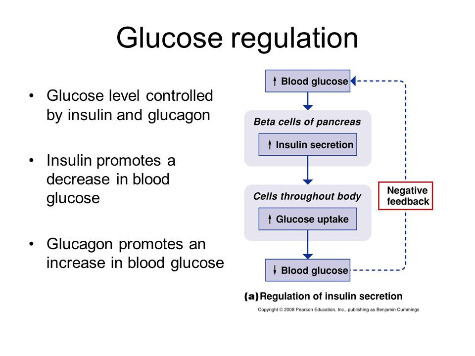 Glucose regulation Glucose level controlled by insulin and glucagon Insulin promotes a decrease in blood glucose Glucagon promotes an increase in bloo