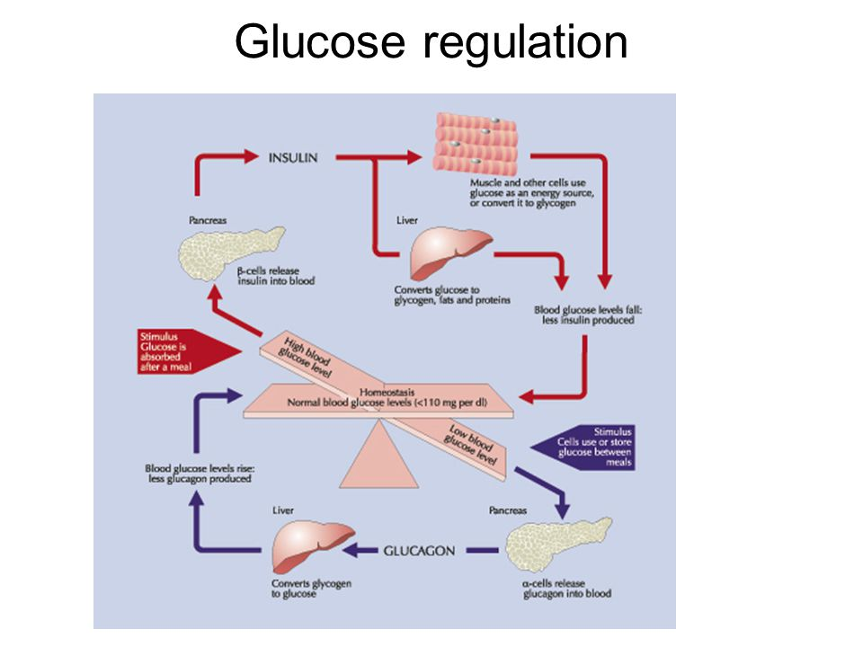 Glucose regulation