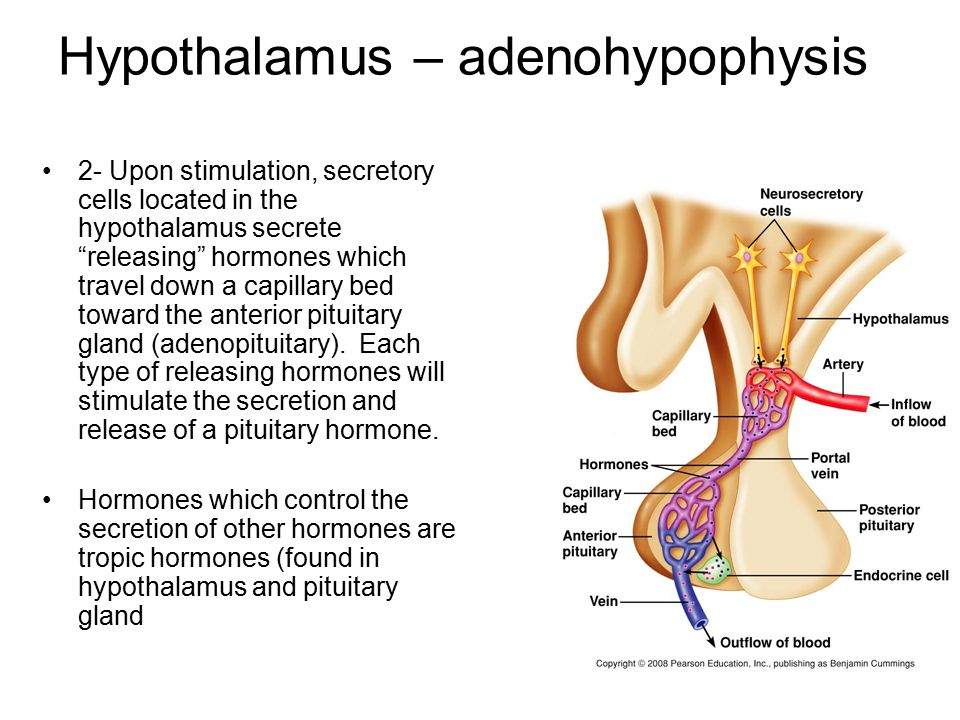 Figure 6.5 Hormones of the hypothalamus and anterior pituitary gland