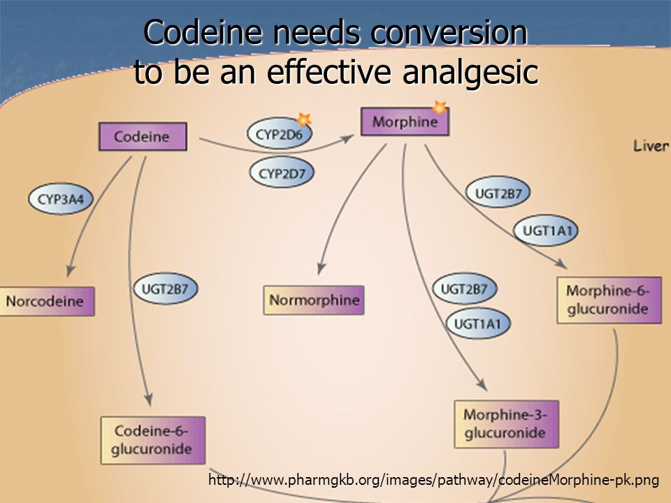 Drug Interactions - another problem 2D6 drug inhibitors impact codeine's conversion; 2D6 drug inhibitors impact codeine's conversion; delays pain relief delays pain relief reduces max blood level reduces max blood level reduces pain relief reduces pain relief increases toxicity risk increases toxicity risk CYP2D6 – involved in CYP2D6 – involved in 11 to 25% of all drugs 11 to 25% of all drugs Many common drugs Many common drugs Interactions Less Drugs Less Slide created by Bruce Kennedy, Palliative Care Pharmacist, bruce.kennedy@fraserhealth.ca