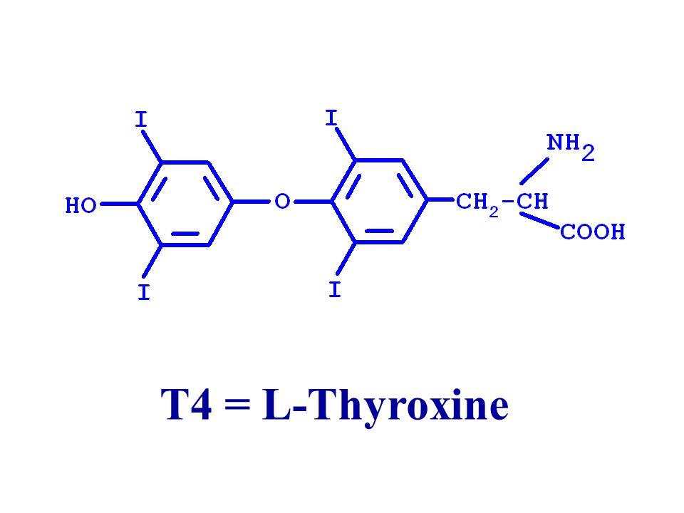 Tyrosine Di-iodotyrosine