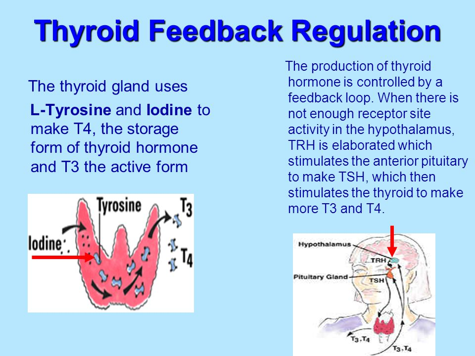 Hypothyroid Causes Adrenal Dysfunction   Results in hypersecretion of CRH and AVP from hypothalamus   Significantly increased pituitary content of VIP   ↓ Adrenal weight, ↓ Corticosterone    ACTH, CRH, AVP Tohei A.