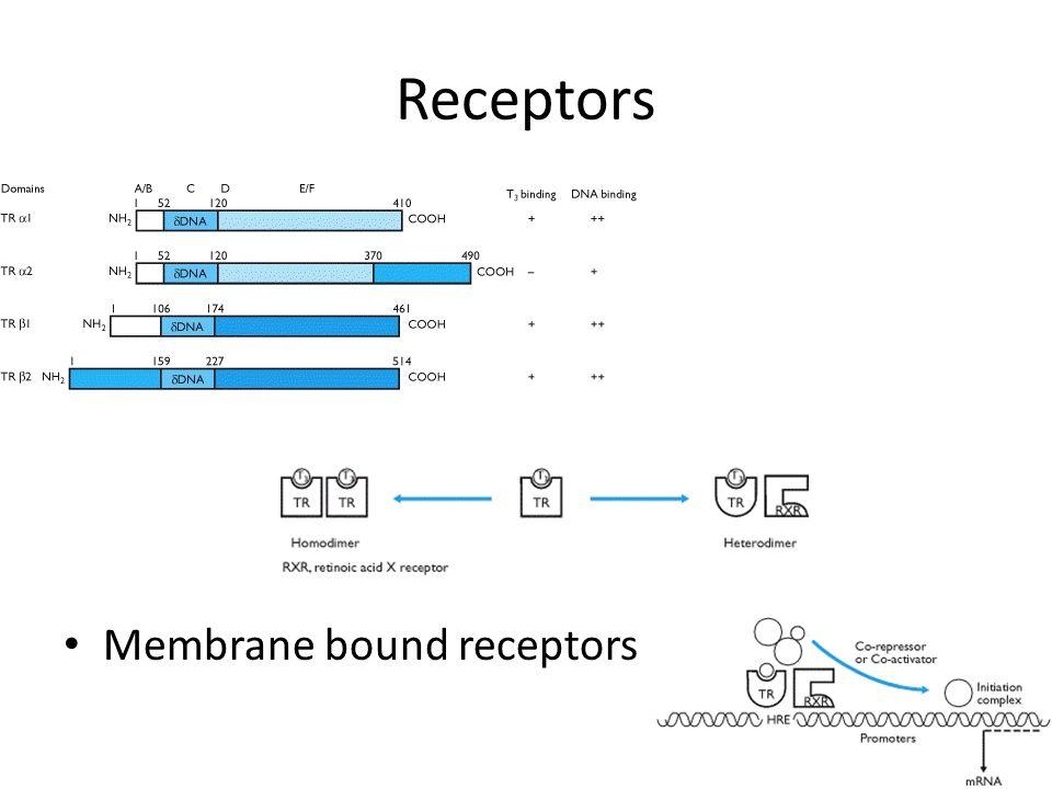 Receptors Membrane bound receptors