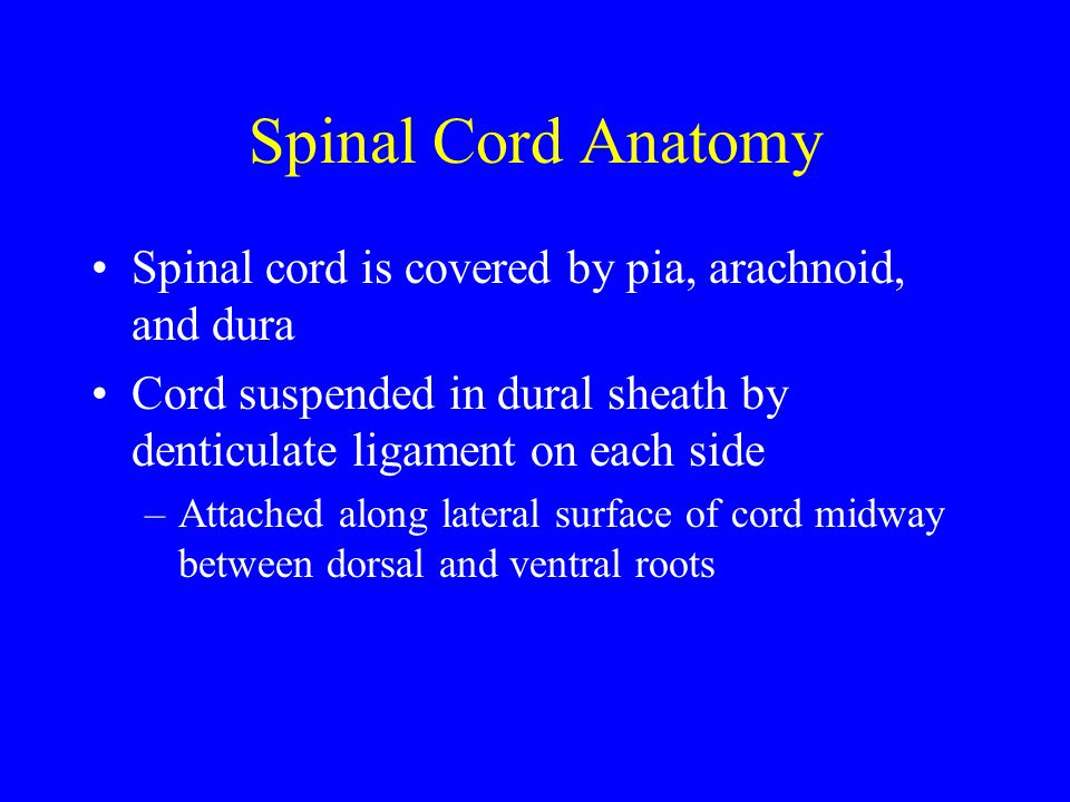 Spinal cord anatomy Cord is enlarged in cervical (C4-T1) and lumbosacral regions (L2-S3) Cord contains grey matter, white matter tracts, and central canal Central canal lined by ependyma