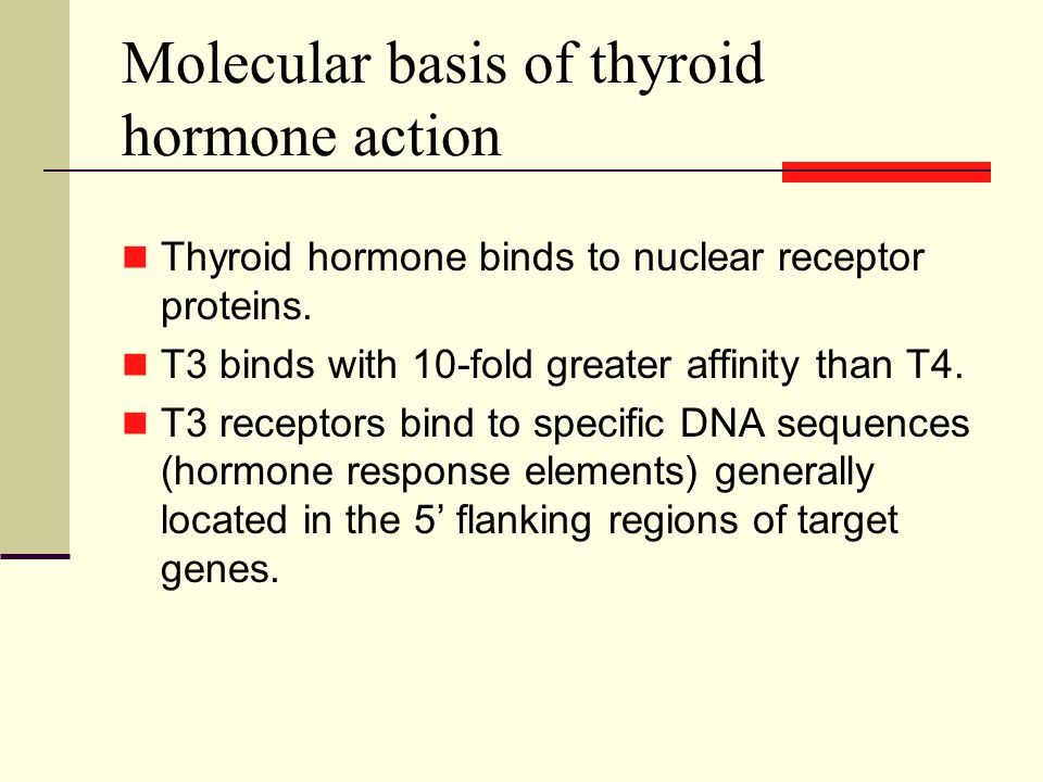 Molecular basis of thyroid hormone action Thyroid hormone binds to nuclear receptor proteins.