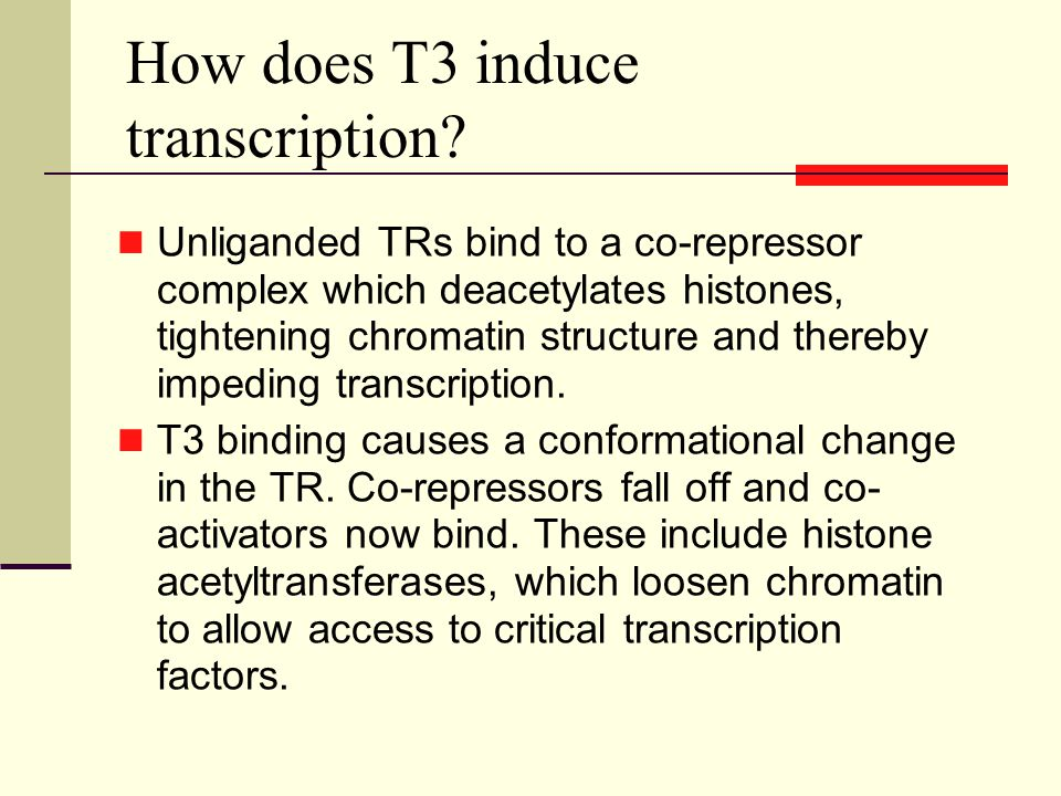 How does T3 induce transcription.