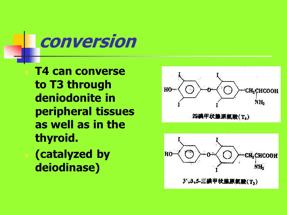 conversion T4 can converse to T3 through deniodonite in peripheral tissues as well as in the thyroid. (catalyzed by deiodinase)