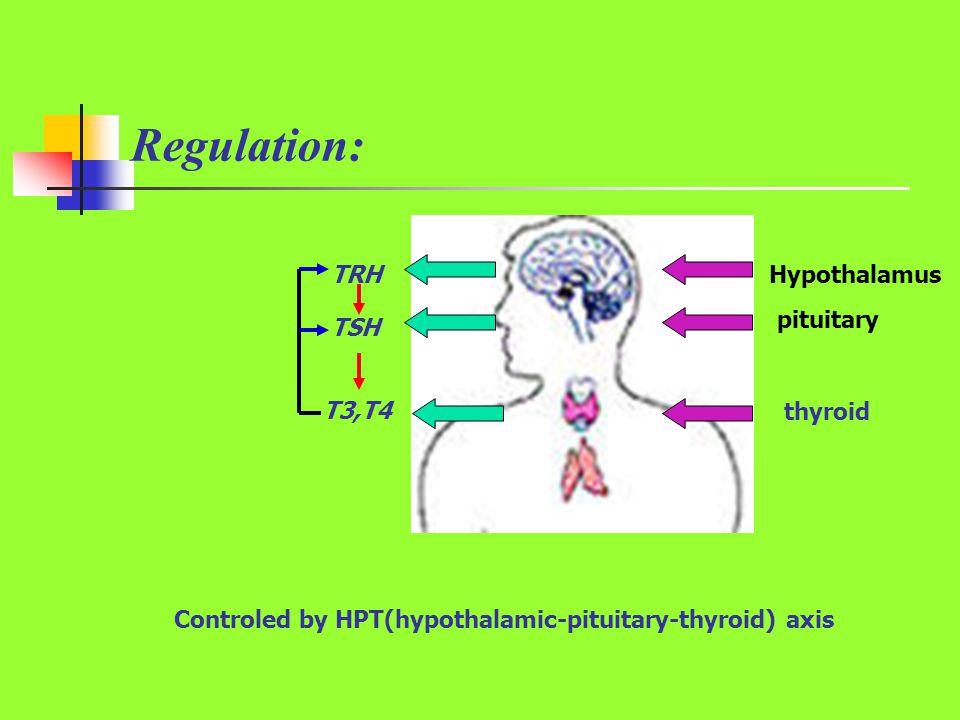 Regulation: TRH TSH T3,T4 Hypothalamus pituitary thyroid Controled by HPT(hypothalamic-pituitary-thyroid) axis