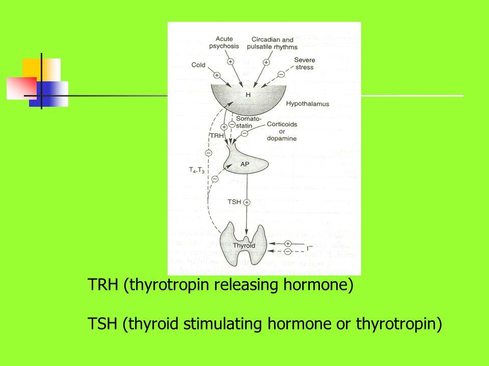 TRH (thyrotropin releasing hormone) TSH (thyroid stimulating hormone or thyrotropin)