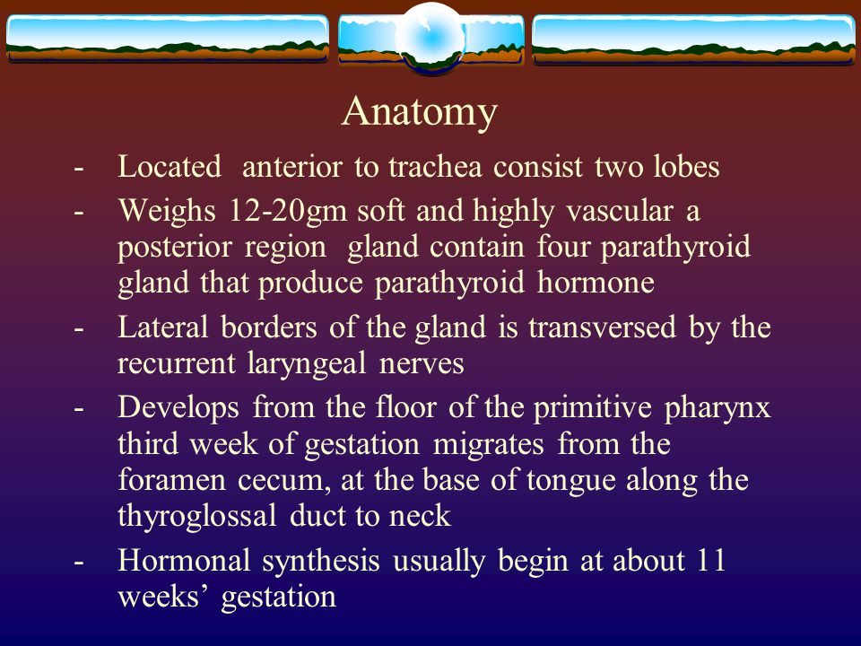 Anatomy -Located anterior to trachea consist two lobes - Weighs 12-20gm soft and highly vascular a posterior region gland contain four parathyroid gla