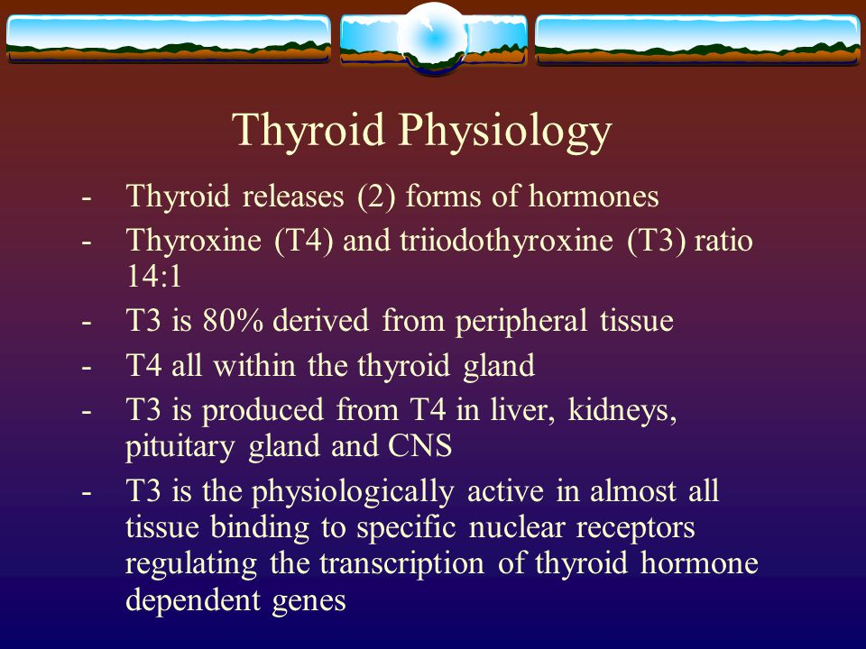Thyroid Physiology - Thyroid releases (2) forms of hormones -Thyroxine (T4) and triiodothyroxine (T3) ratio 14:1 - T3 is 80% derived from peripheral t
