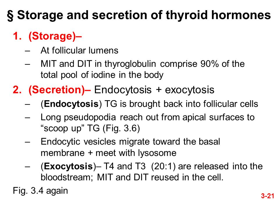 § Storage and secretion of thyroid hormones 1.(Storage)– –At follicular lumens –MIT and DIT in thyroglobulin comprise 90% of the total pool of iodine in the body 2.(Secretion)– Endocytosis + exocytosis –(Endocytosis) TG is brought back into follicular cells –Long pseudopodia reach out from apical surfaces to scoop up TG (Fig.