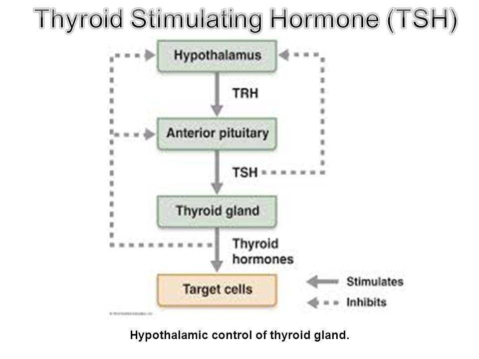Hypothalamic control of thyroid gland.