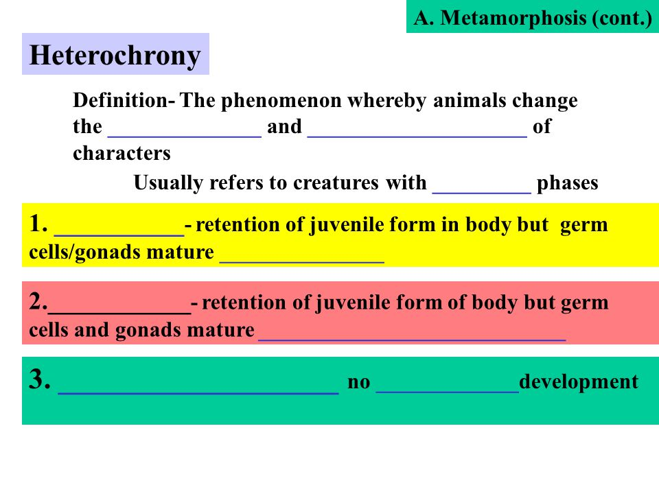 Heterochrony Definition- The phenomenon whereby animals change the ______________ and ____________________ of characters 1. __________ - retention of