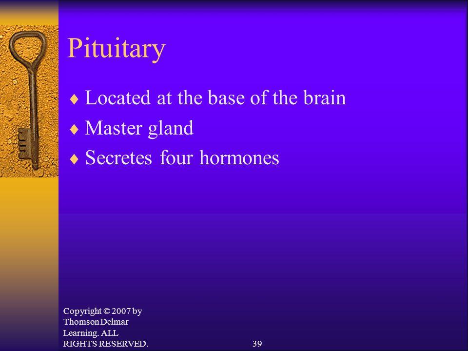 Copyright © 2007 by Thomson Delmar Learning. ALL RIGHTS RESERVED.39 Pituitary  Located at the base of the brain  Master gland  Secretes four hormon