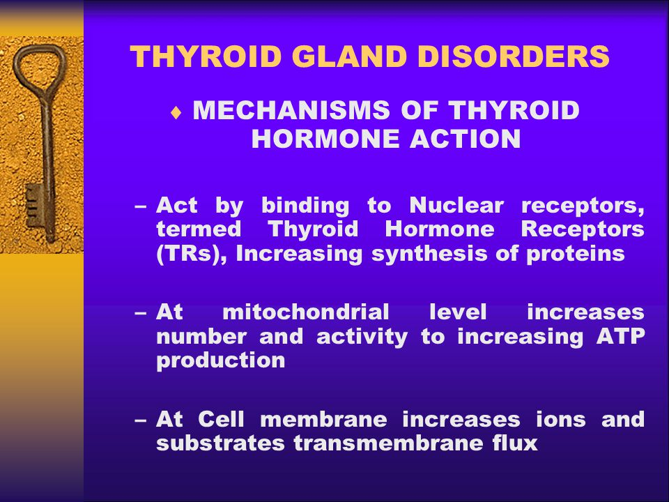 THYROID GLAND DISORDERS  MECHANISMS OF THYROID HORMONE ACTION –Act by binding to Nuclear receptors, termed Thyroid Hormone Receptors (TRs), Increasin