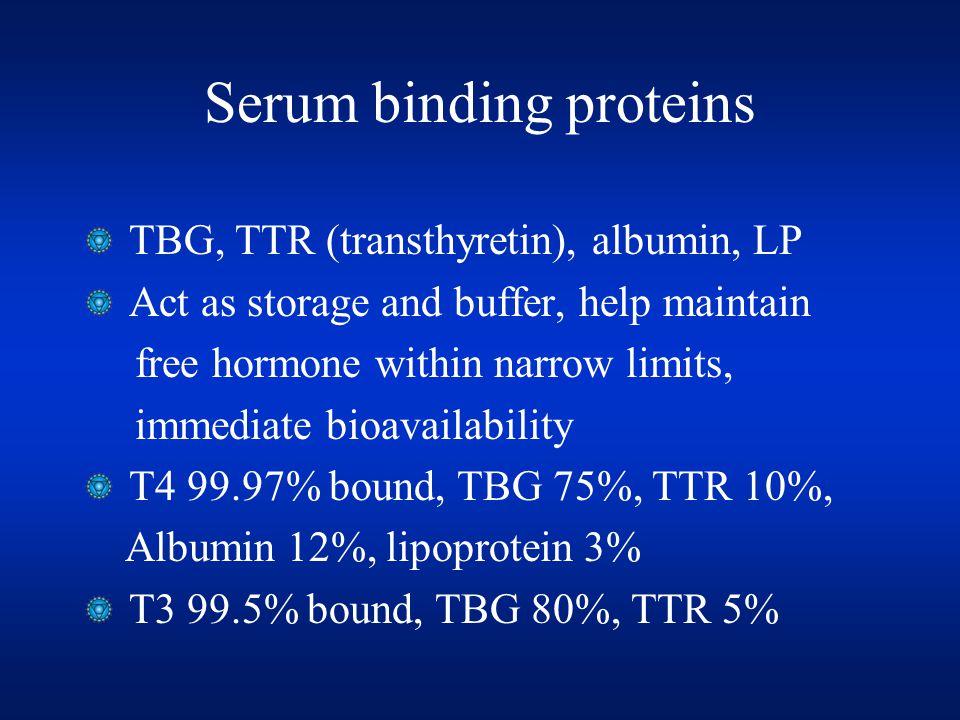 Serum binding proteins TBG, TTR (transthyretin), albumin, LP Act as storage and buffer, help maintain free hormone within narrow limits, immediate bio