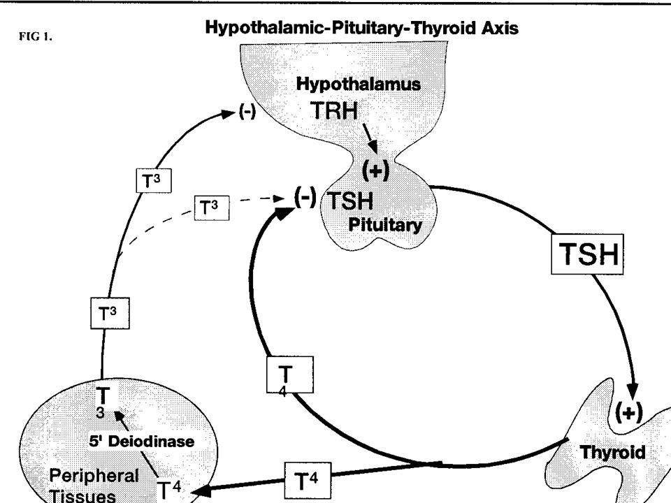 Chemistry & Pathophysiology T4 - 80 ug/d produced by the thyroid gland T3 - 30 ug/d; 80% by peripheral action of 5' deiodinase T4 - 99.97% bound & T3 99.0% bound to TBG, albumin & pre-albumin FT4 & FT3 exert negative feedback on TSH Hypothalamic TRH modulates feedback setpoint