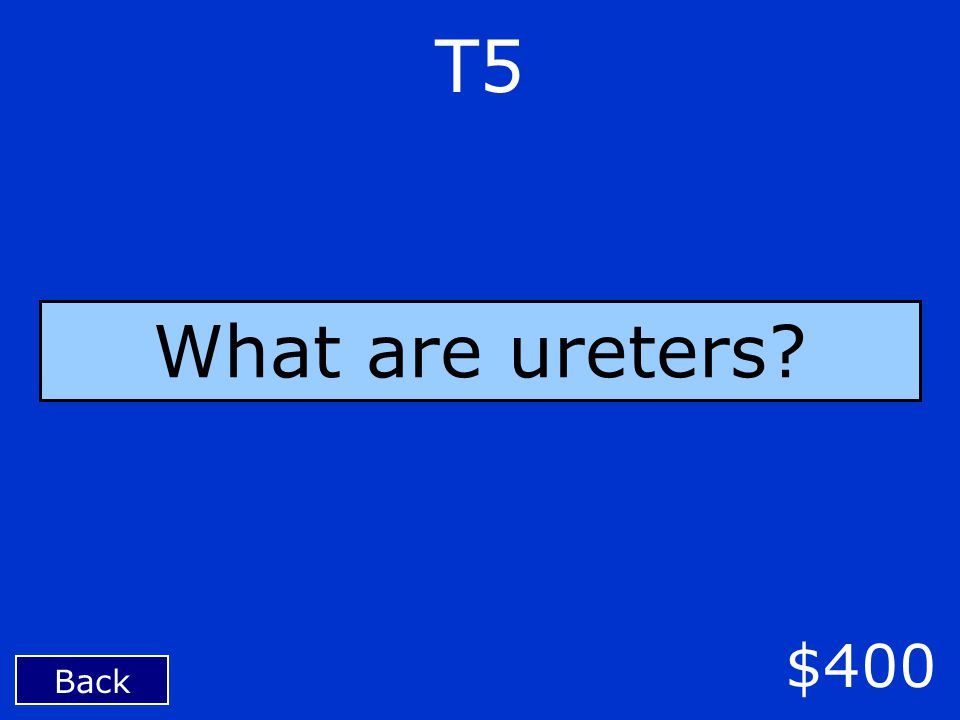 Back $400 T5 What are ureters?