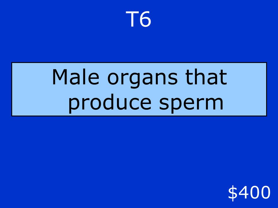 $400 T6 Male organs that produce sperm