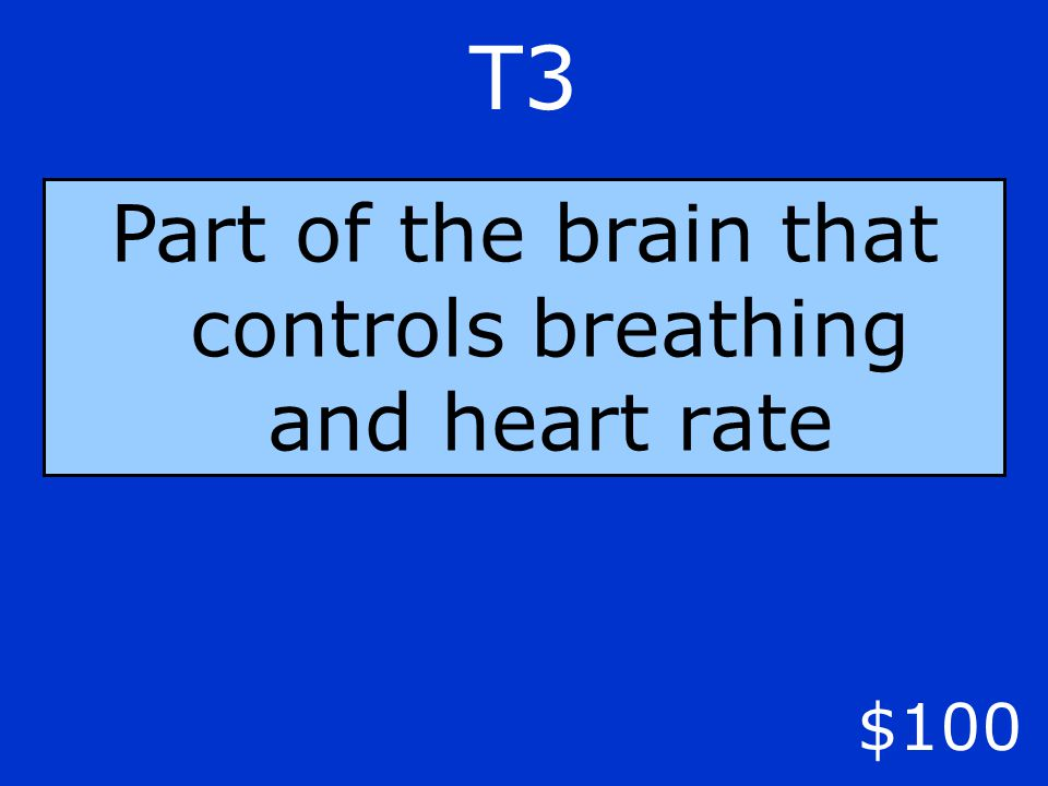 T3 $100 Part of the brain that controls breathing and heart rate