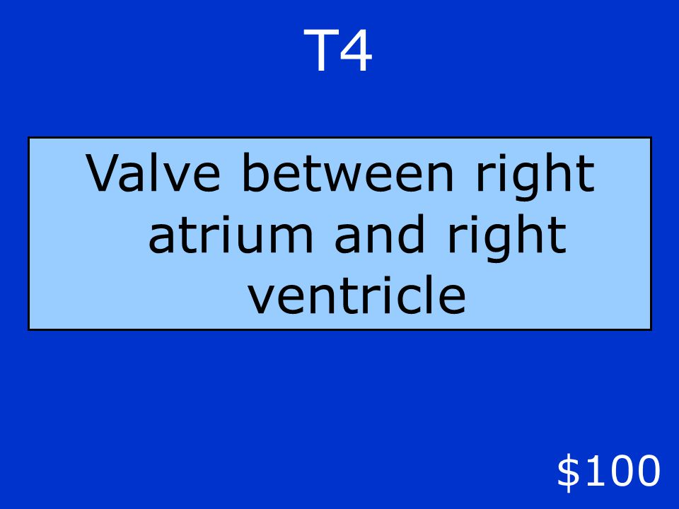 T4 $100 Valve between right atrium and right ventricle