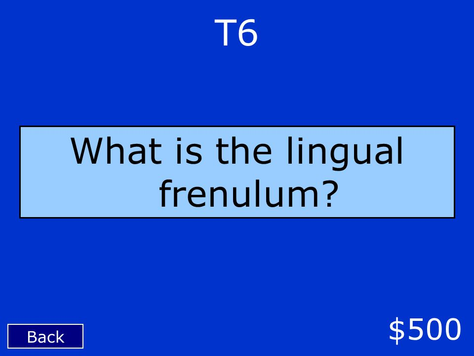 T6 Back $500 What is the lingual frenulum?