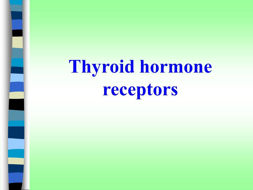 Thyroid hormone receptors