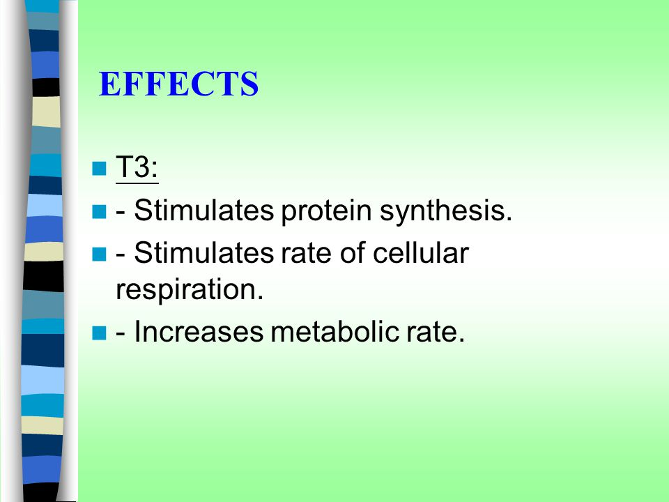 EFFECTS T3: - Stimulates protein synthesis. - Stimulates rate of cellular respiration. - Increases metabolic rate.