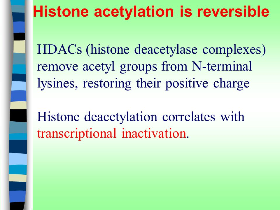 Histone acetylation is reversible HDACs (histone deacetylase complexes) remove acetyl groups from N-terminal lysines, restoring their positive charge