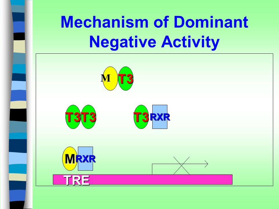 Mechanism of Dominant Negative Activity T3 T3T3T3RXR TRE TRE MRXR M