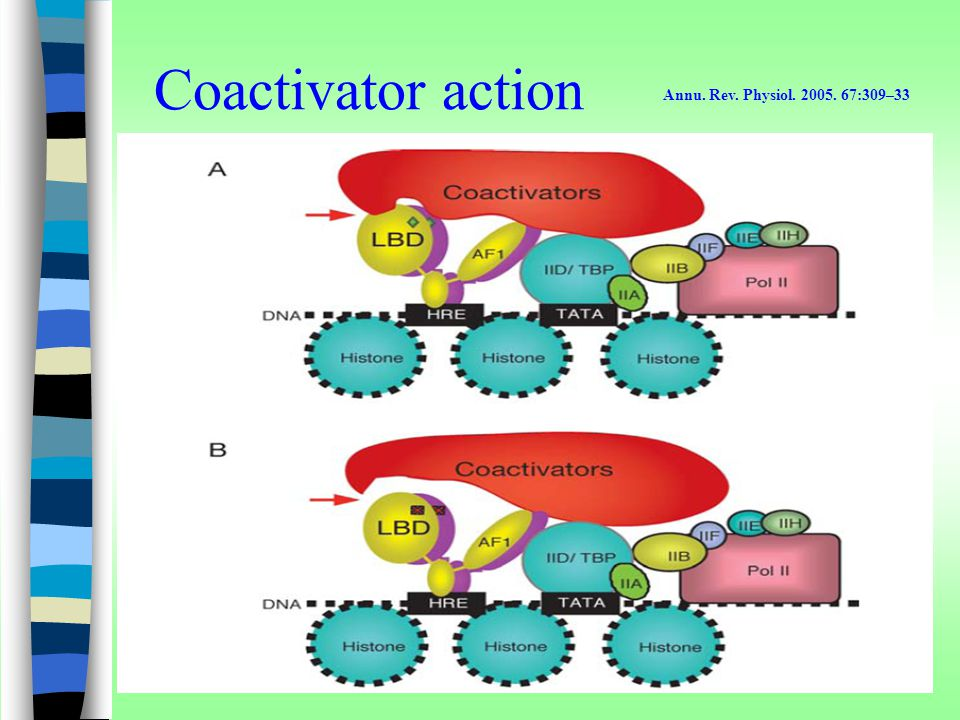 Coactivator action Annu. Rev. Physiol. 2005. 67:309–33