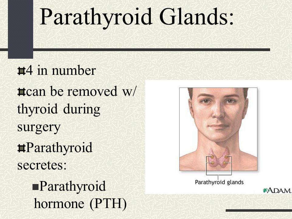 Parathyroid Glands: 4 in number can be removed w/ thyroid during surgery Parathyroid secretes: Parathyroid hormone (PTH)