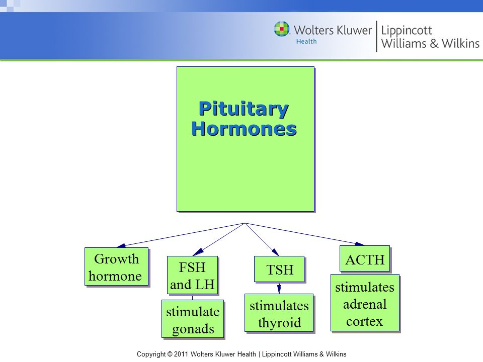 Copyright © 2011 Wolters Kluwer Health | Lippincott Williams & Wilkins Scenario Two women have benign pituitary tumors… One woman has lost weight and complains of being hot all the time; she presents as thin and nervous, with tachycardia and exophthalmos The second woman has gained weight in her abdomen and presents with a round face and thin arms and legs with stretch marks; she says that at her last checkup her doctor told her she was pre- diabetic Question What hormones are being secreted by the pituitary tumors in these patients.