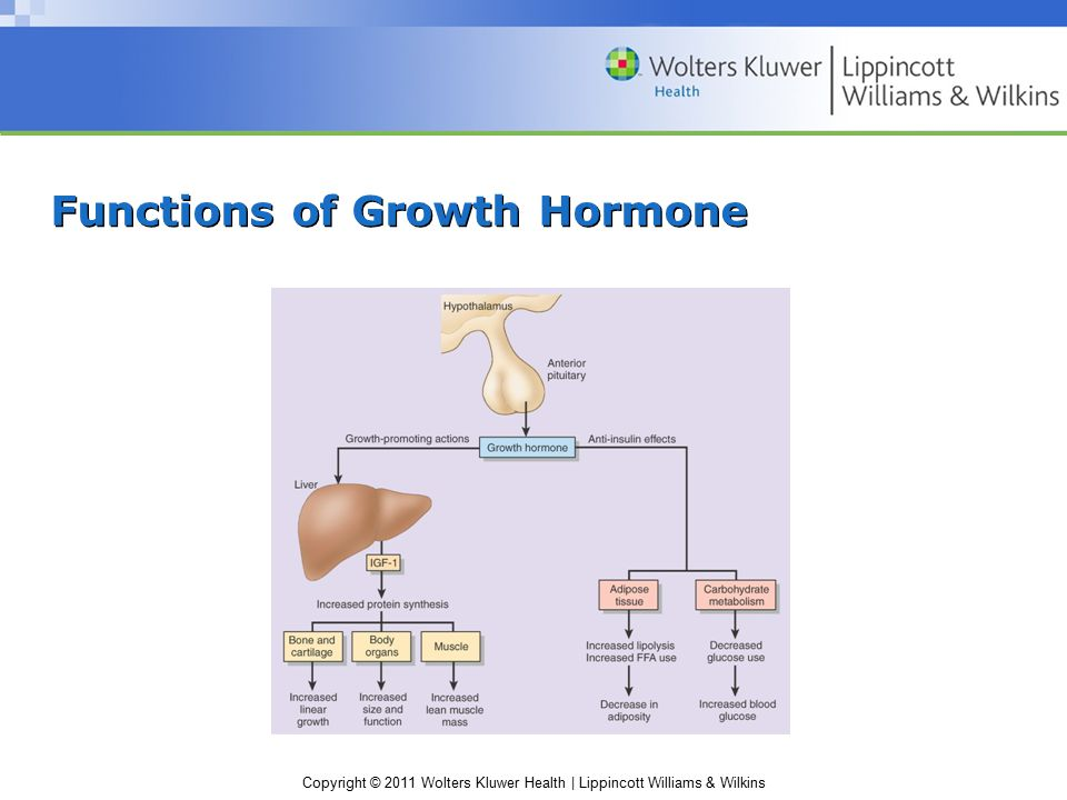 Copyright © 2011 Wolters Kluwer Health | Lippincott Williams & Wilkins Growth Hormone Deficiency Idiopathic GH deficiency –Lacks hypothalamic GHRH Pituitary tumors, agenesis of the pituitary –Cannot produce GH Laron-type dwarfism –Hereditary defect in IGF production