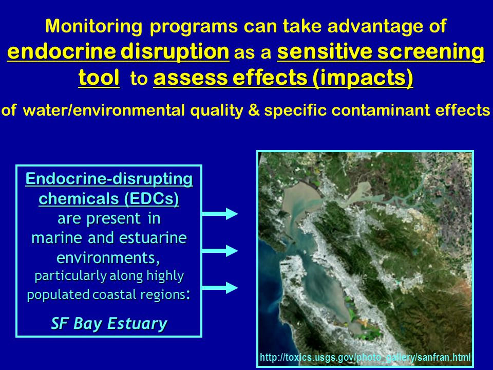 endocrine disruptionsensitive screening toolassess effects (impacts) Monitoring programs can take advantage of endocrine disruption as a sensitive screening tool to assess effects (impacts) of water/environmental quality & specific contaminant effects Endocrine-disrupting chemicals (EDCs) are present in marine and estuarine environments, particularly along highly populated coastal regions : SF Bay Estuary http://toxics.usgs.gov/photo_gallery/sanfran.html